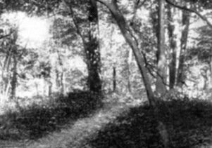 Surviving primal forest on Inwood Hill in Manhattan, some of which is still standing today, as seen in 1898. (photo: James Ruel Smith)