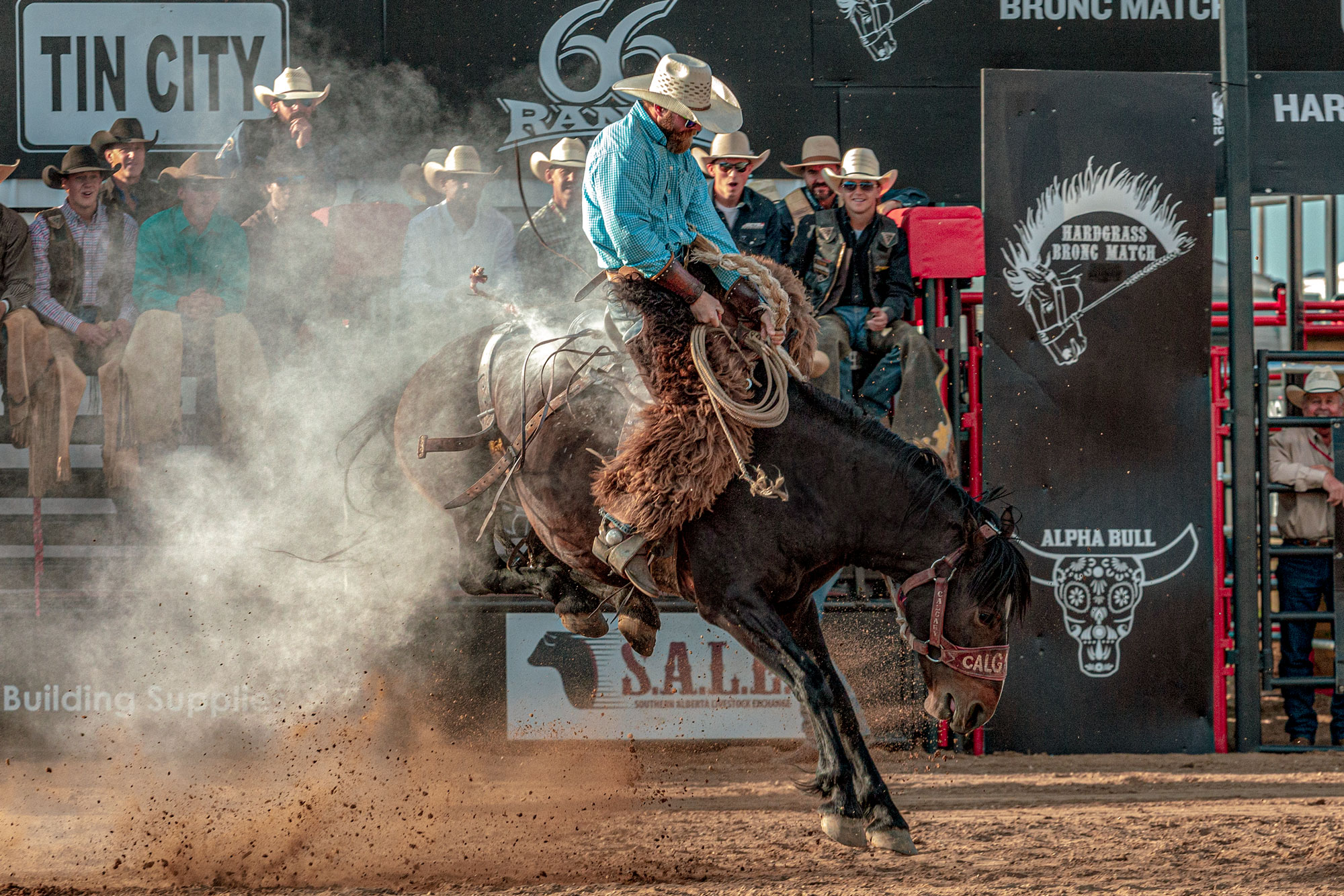 Bust Out Bronc