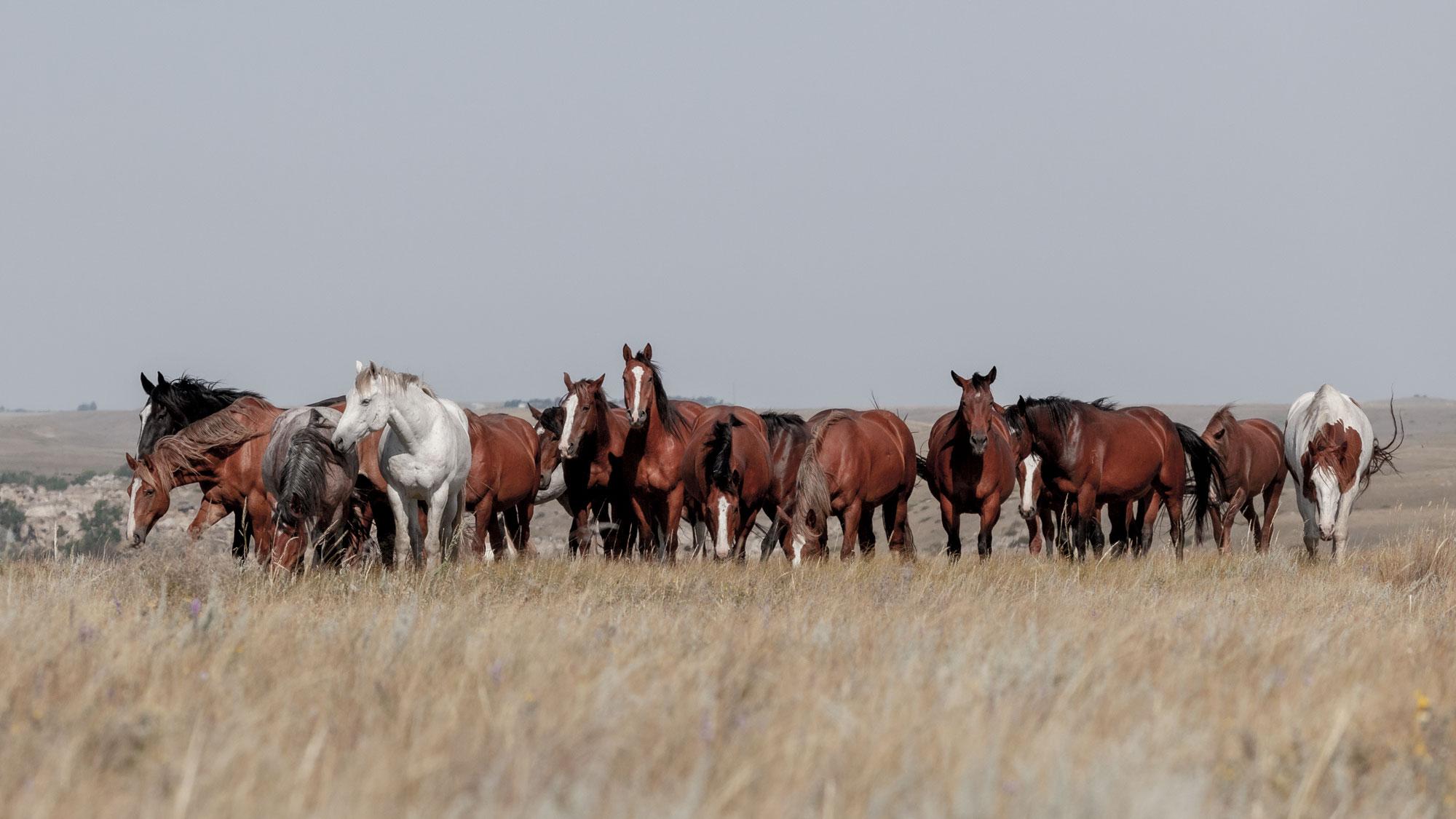 White Line Rodeo Horses