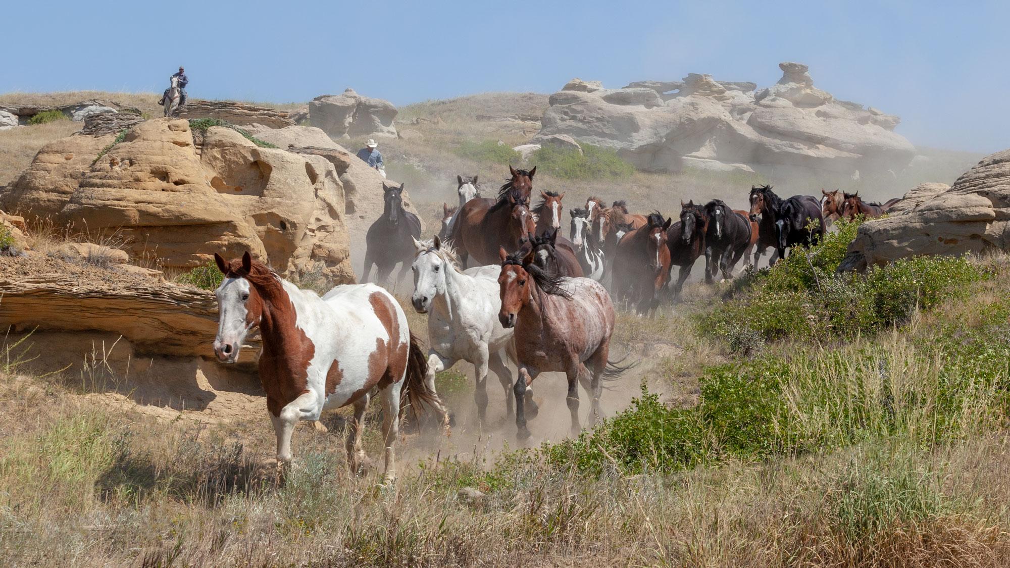 Writing-on-Stone with Horses
