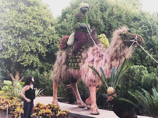 In Awe at the @atlbotanical.... • • • • • •#atlantabotanicalgardens #camels #atlanta #sculptures #plantsculptures #design #flowers #inawe