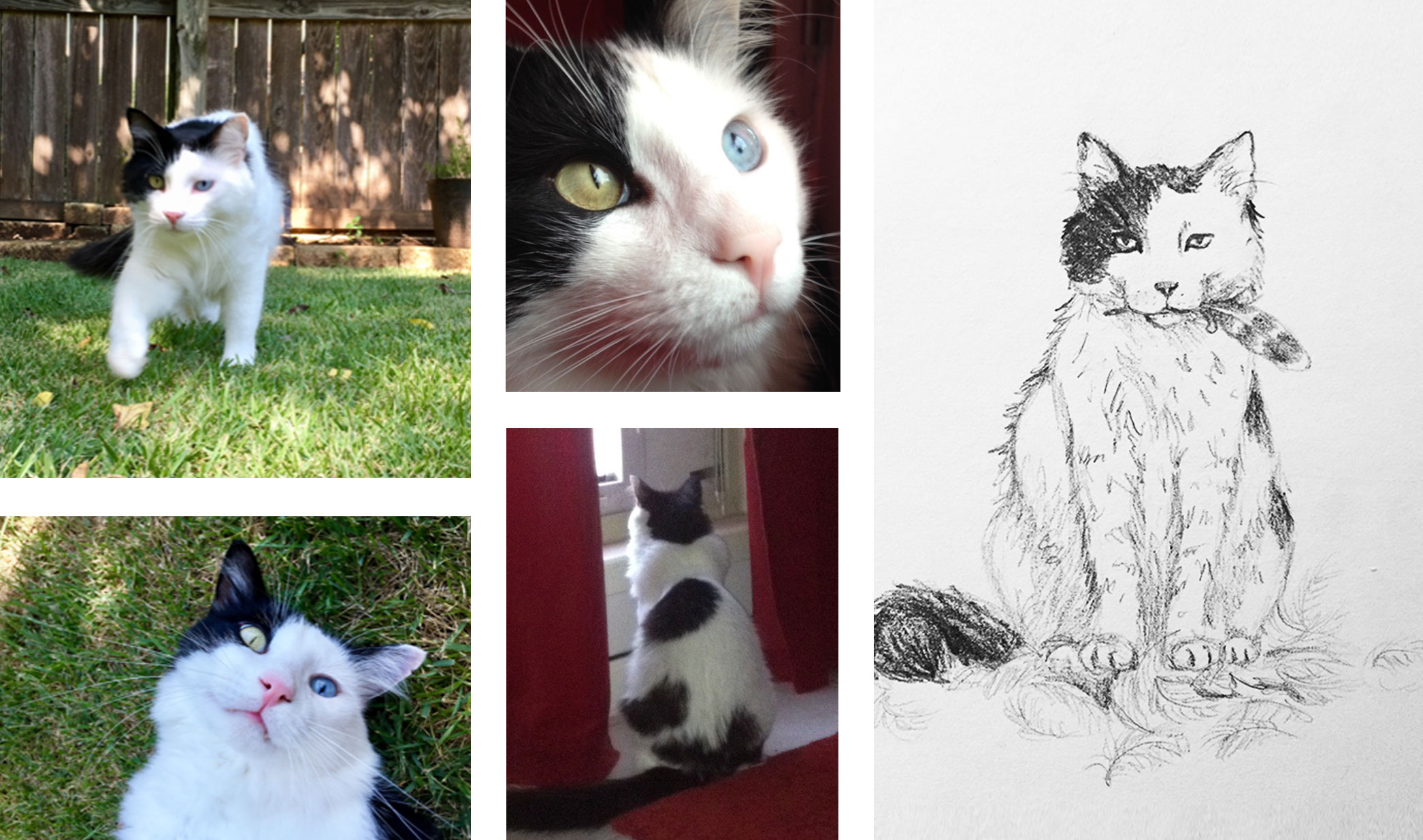 reference photos and initial sketch