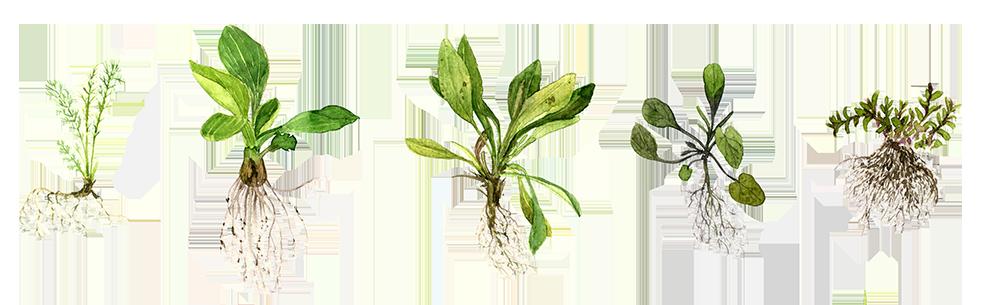 weeds color.png