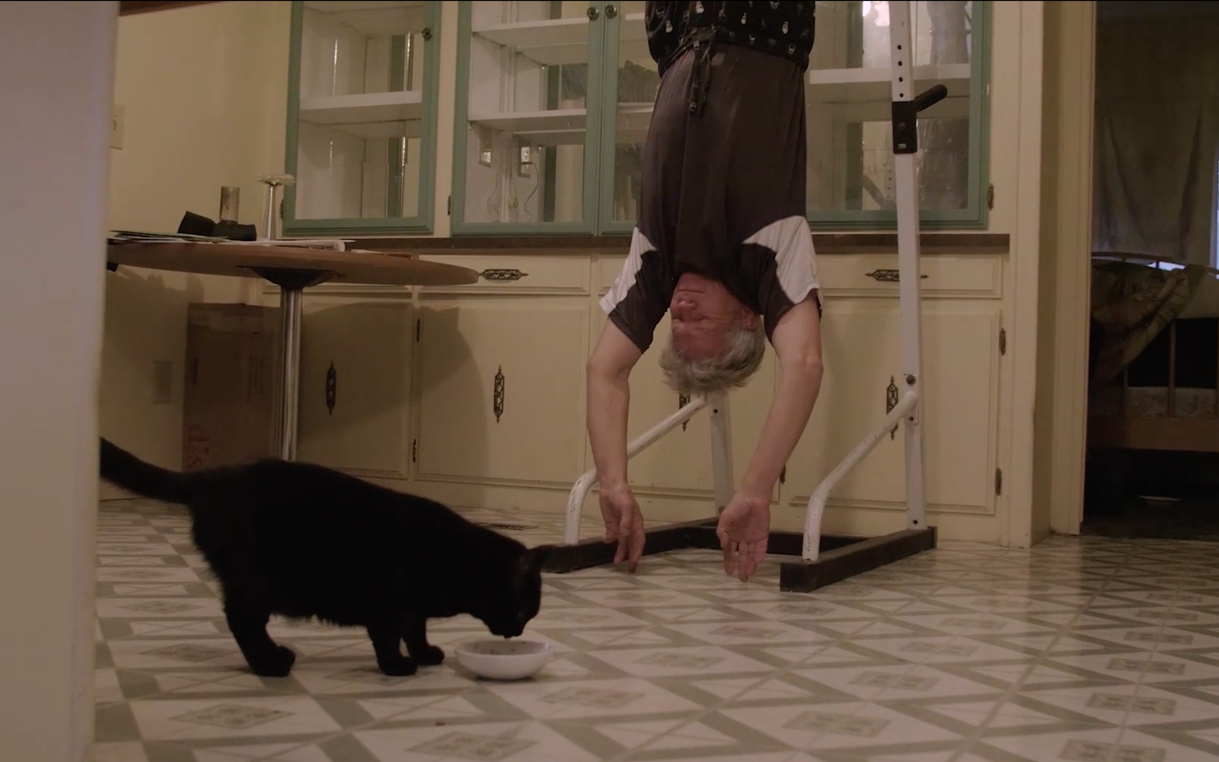 'Mad Mike' hangs inverted during his morning routine as Halley the cat eats her breakfast.