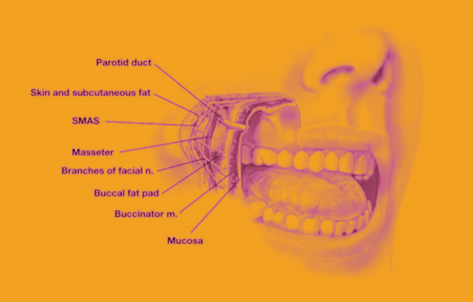 Buccal Mucosal - The buccal mucosa is the lining of the cheeks and the back of the lips, inside the mouth where they touch the teeth.