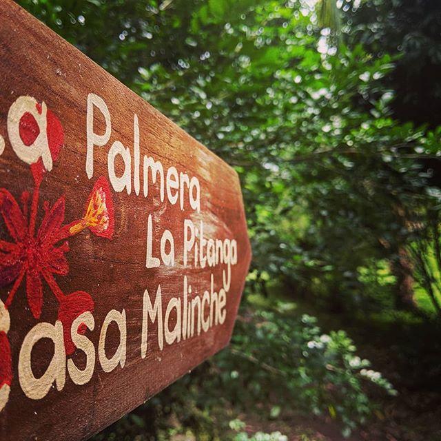 Welcome, to our slice of jungle paradise! 🏵️ . . #casamalinche  #bambouseraie_ometepe  #bamboohouse  #bamboocabin  #bamboocabins  #bamboofurniture  #sustainablebuildings  #sustainabletravel  #sustainabletourism  #butterflyhaven  #ornamentalplants  #plantasornamentales  #mariposas #cabañas  #junglecabinsometepe  #junglecabin  #cabañasdebambu  #floweringplant  #floweringtree #volcanoconcepcion  #concepcionvolcano  #volcanoconception  #comeandstay  #comevisit #islaometepe  #ometepeisland  #ometepenicaragua
