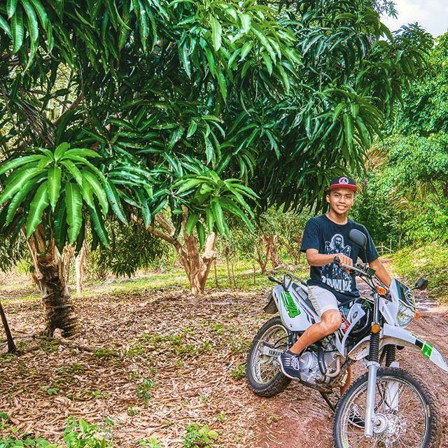 Wish I had a mango tree 🎶 . . . 🥭 #dirtbike  #dirtbikes  #dirtbikeriders  #dirtbiketours  #volcanicisland  #volcanotrails  #exploreometepe  #discovernicaragua  #discoverometepe  #rideinstyle  #helmetsincluded  #getaround  #islandrentals #clandestinotours #asiesmitierra  #nicaraguantraveler  #nicaragua  #nicaragüense  #bambouseraie_ometepe  #junglecabinsometepe  #deliveryservice  #angusandjulia #angusandjuliastone