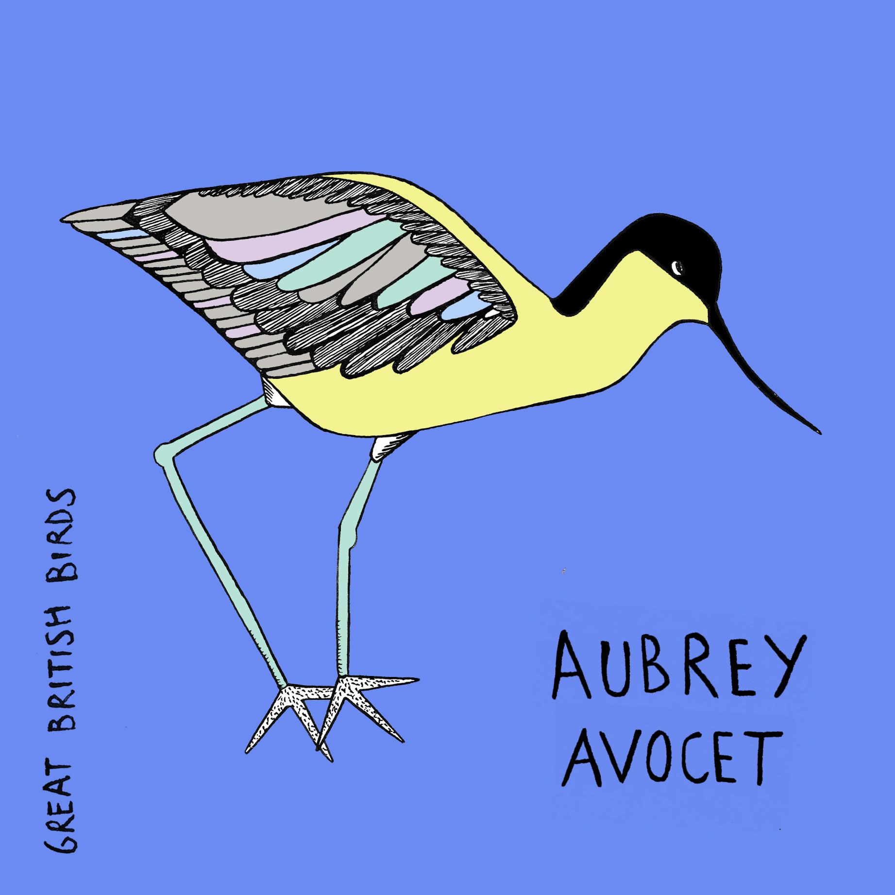 BIRDS_Aubrey_Avocet_Card.jpg