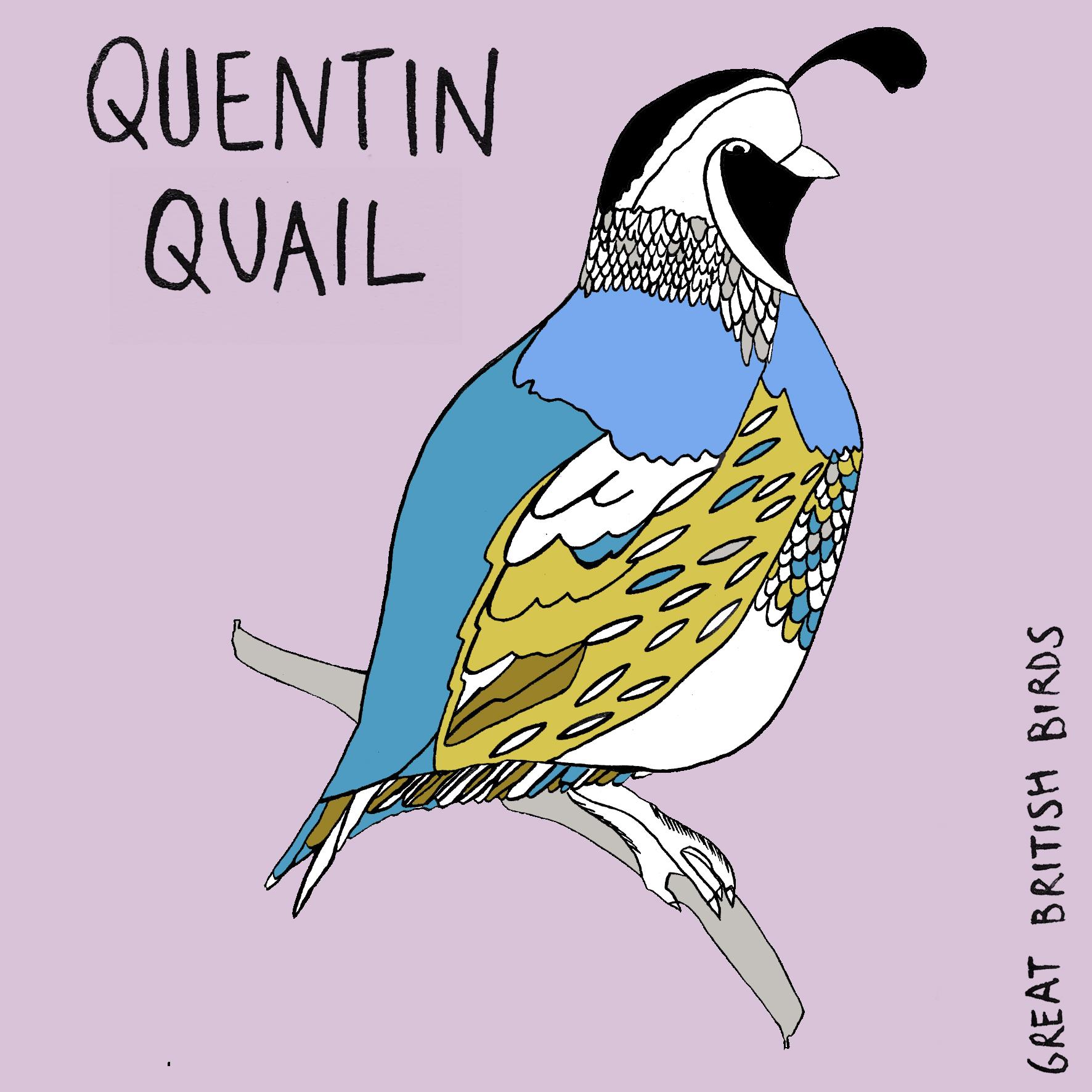 BIRDS_Quail_1.jpg