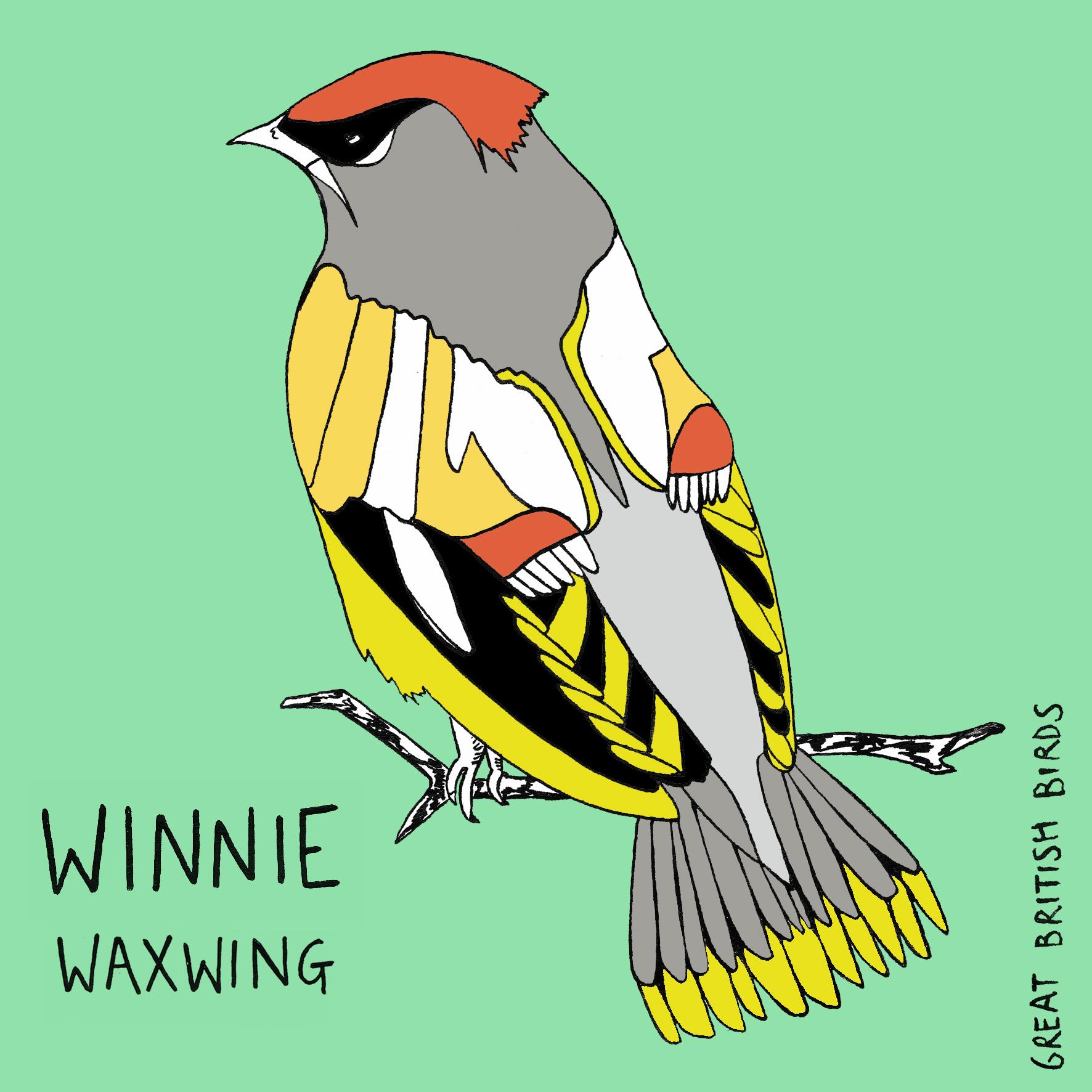 BIRDS_WaxWing_1.jpg