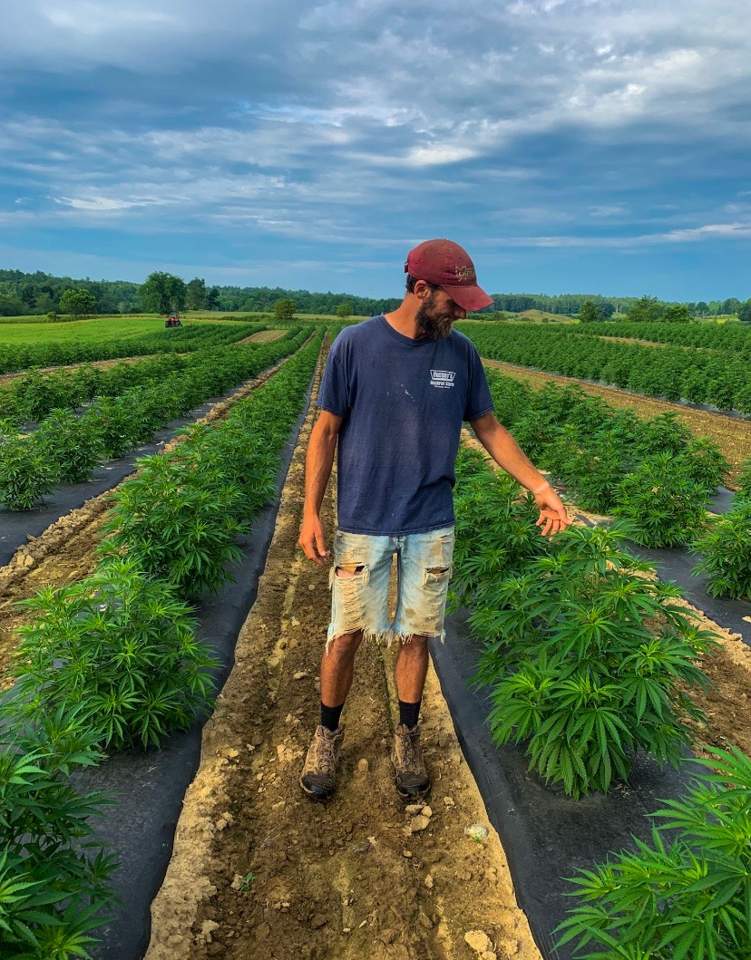 Farmer Ben in the field with the Hemp 7/17/2019