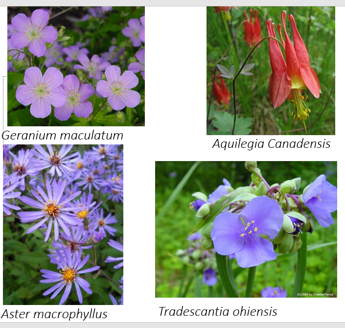 Some native perennials for your yard