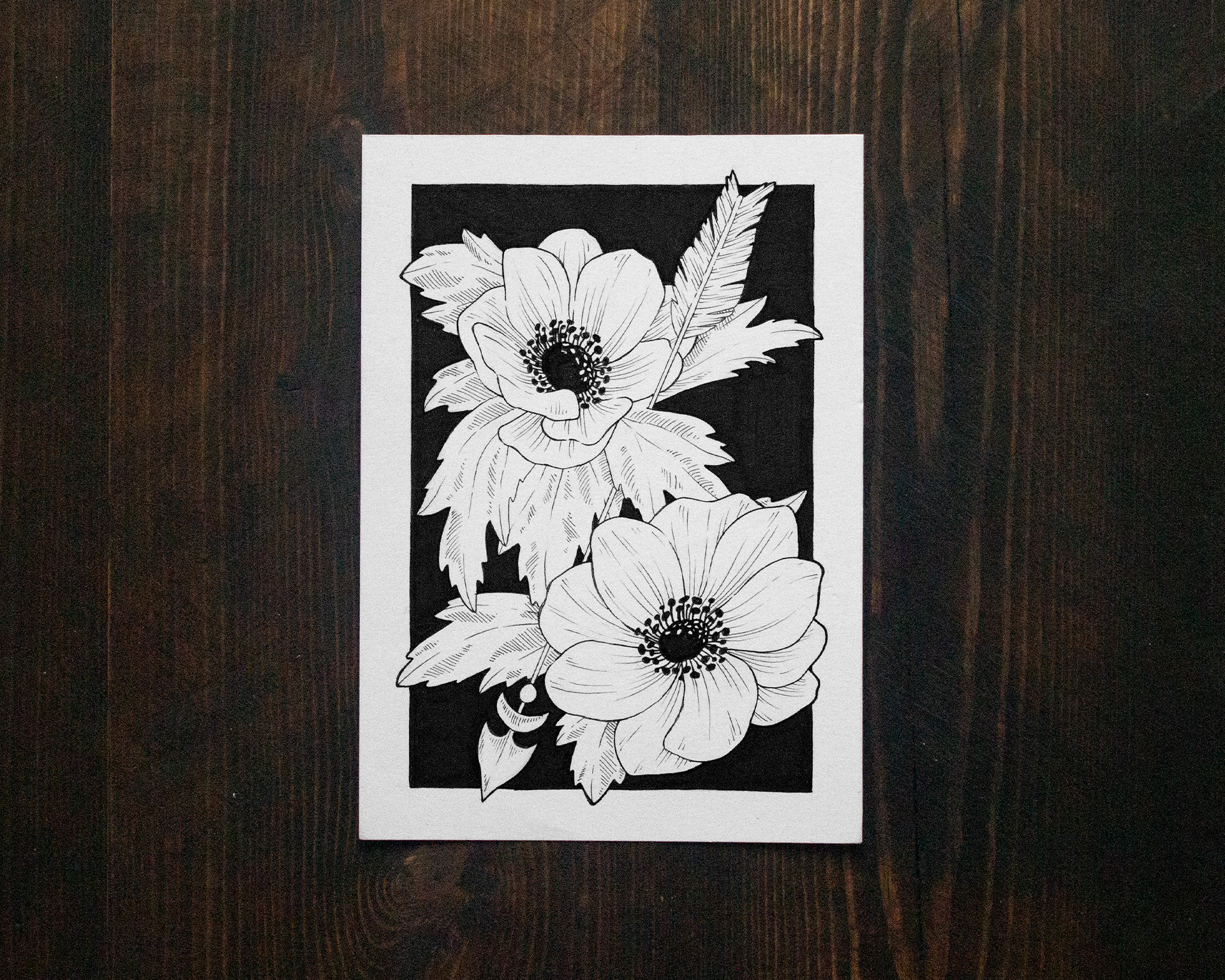 Jenn Sneary Illustration, Anemone, floral pen and ink fantasy drawings