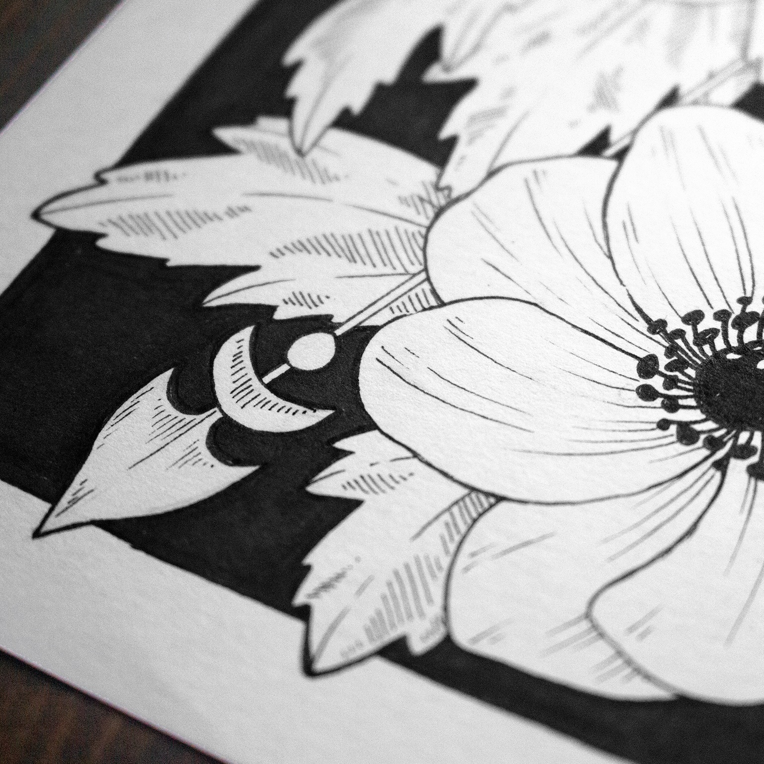 Jenn Sneary Illustration, Anemone, floral pen and Ink drawings