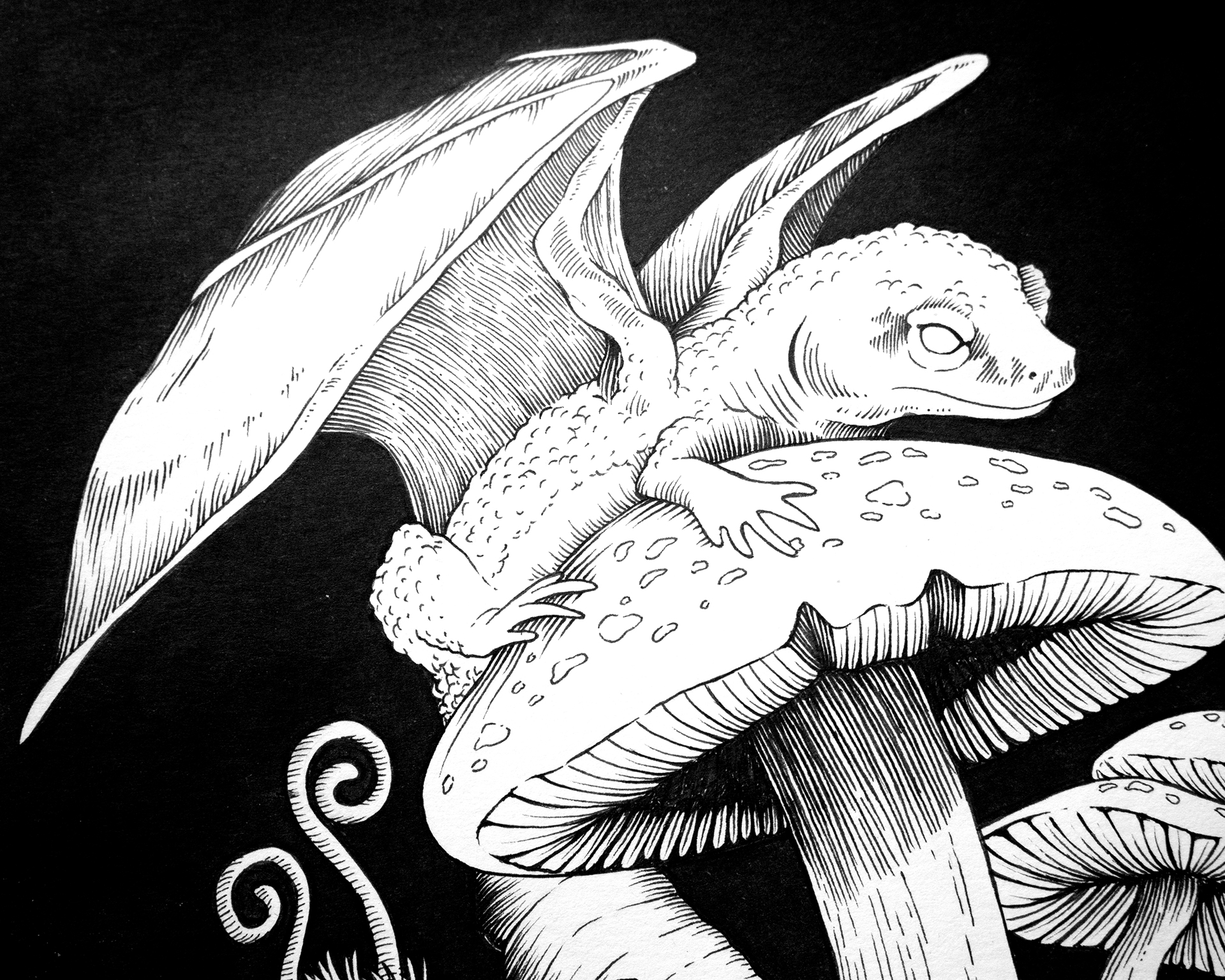 Jenn Sneary Illustration, Treasure Trove, floral dragon pen and ink fantasy drawings