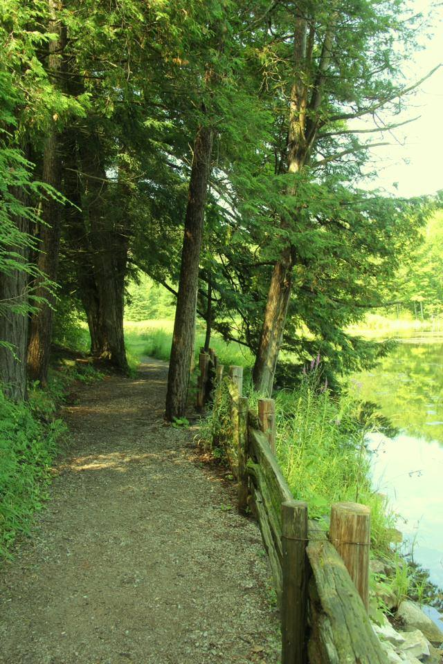 Trails_Mill Pond_OHara Mill.jpg