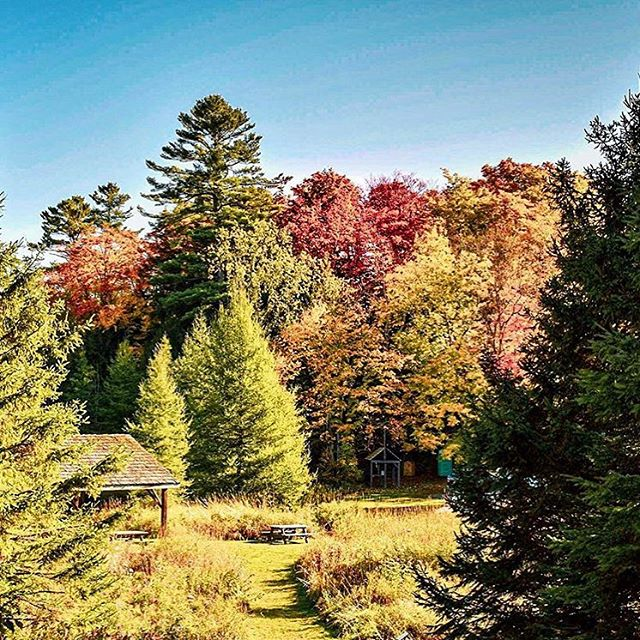 This weekend was filled with colour! Mother Nature has outdone herself this year 🍂  Photo taken by @picnikpatch  #OHaraMill #Homestead #FallColours #QuinteConservation #ConservationOntario #ComeWander #WildlyAuthentic #DiscoverOn