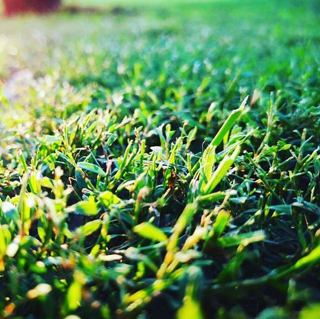 Grass fed,