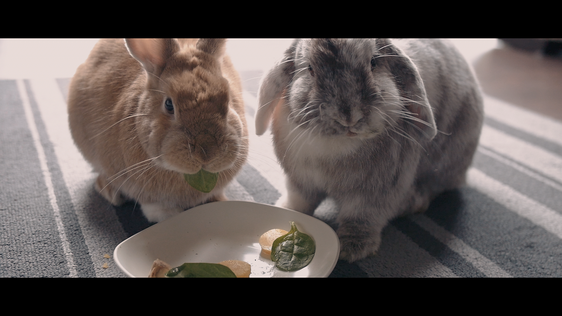 Better Life For Bunnies - Short documentary about educational incursion on care and welfare for bunnies. Rodereel 2019 submission.