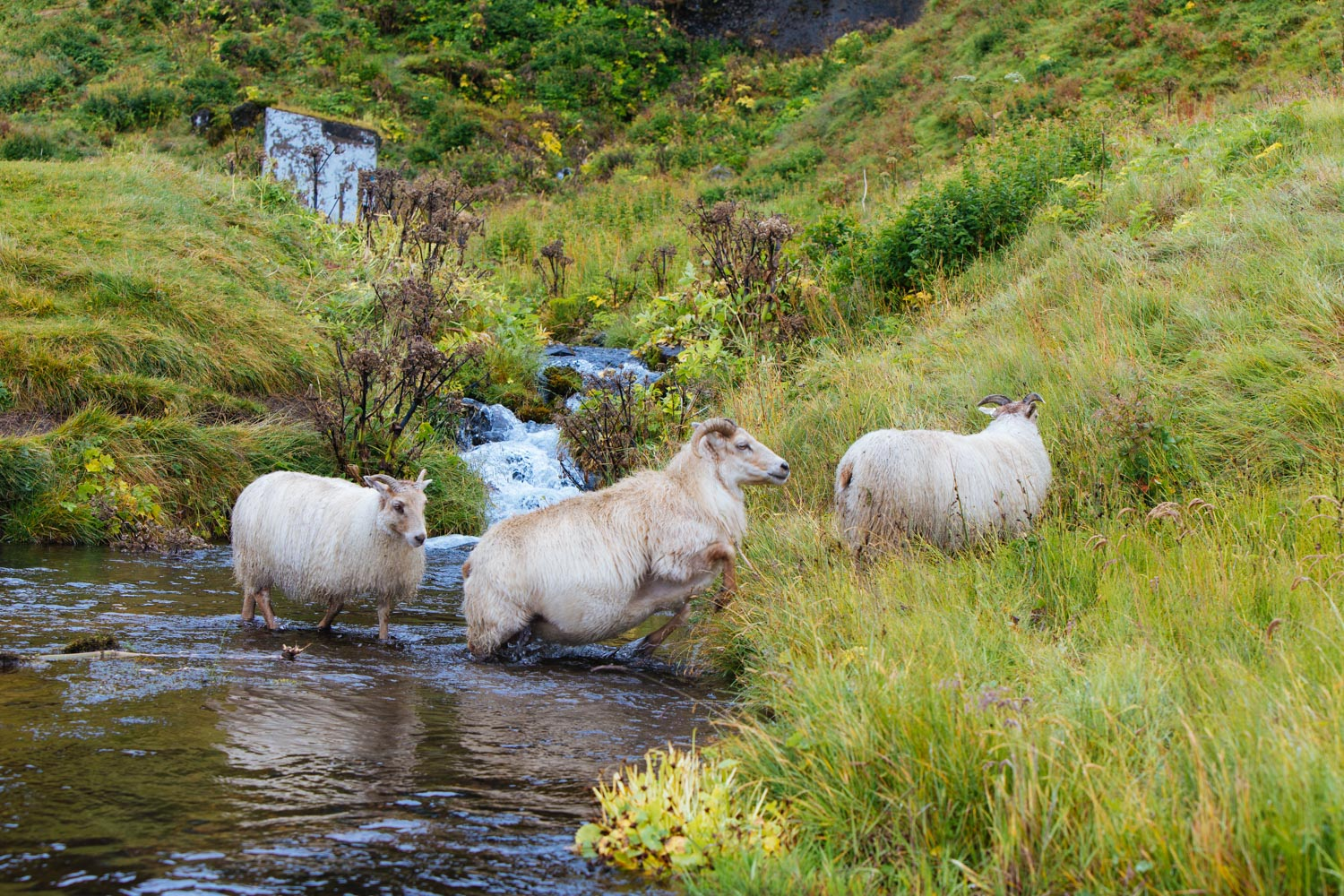Touring-Iceland-8a.jpg