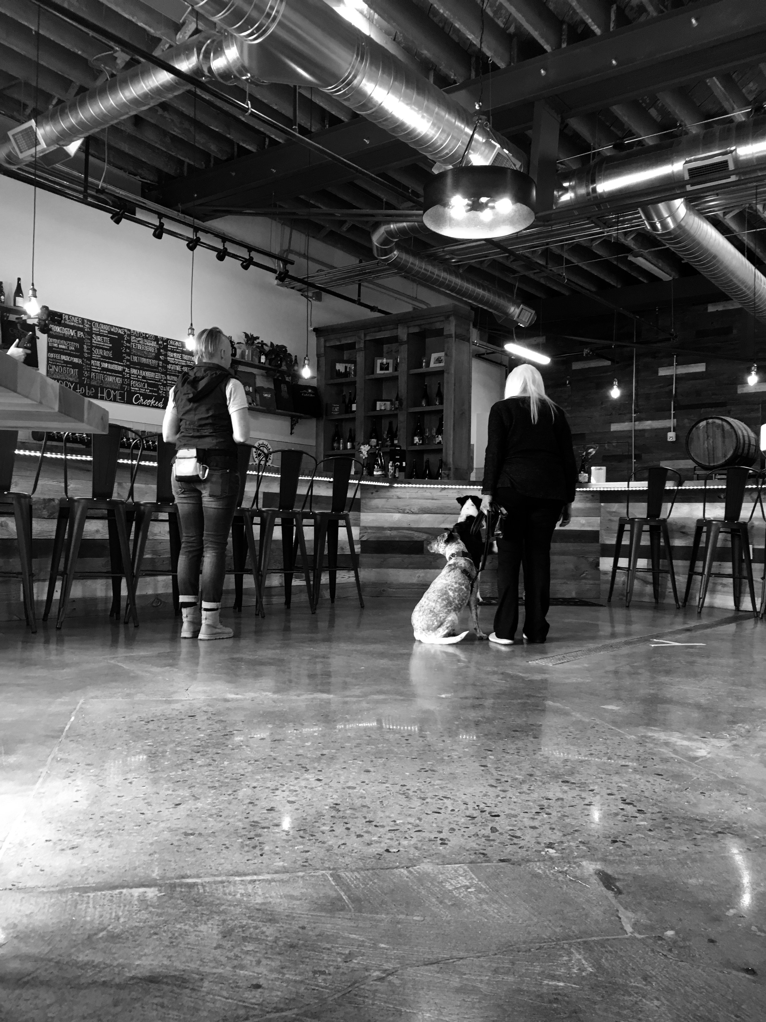 dog-friendly-brewery-manners-classes