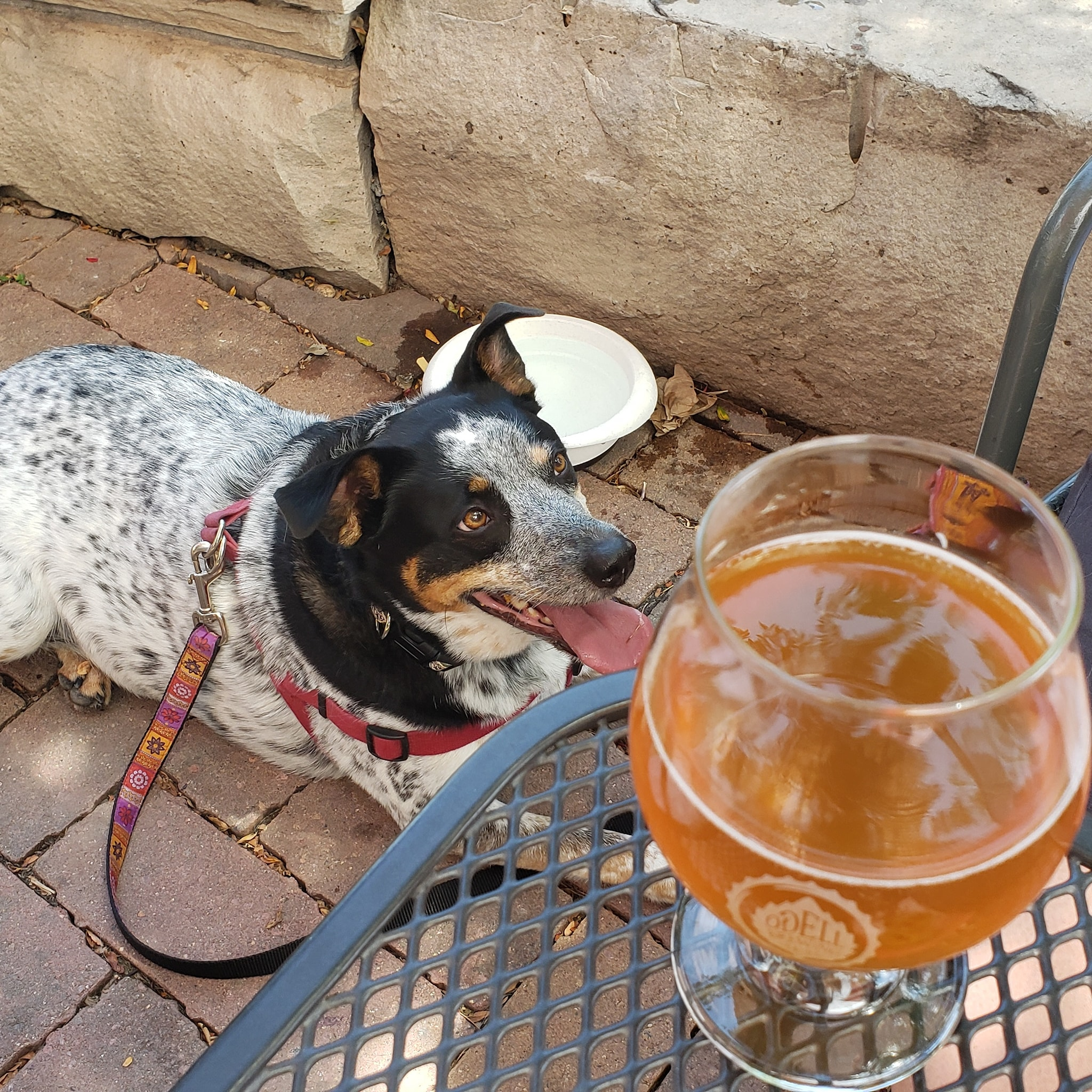 dog-in-a-brewery