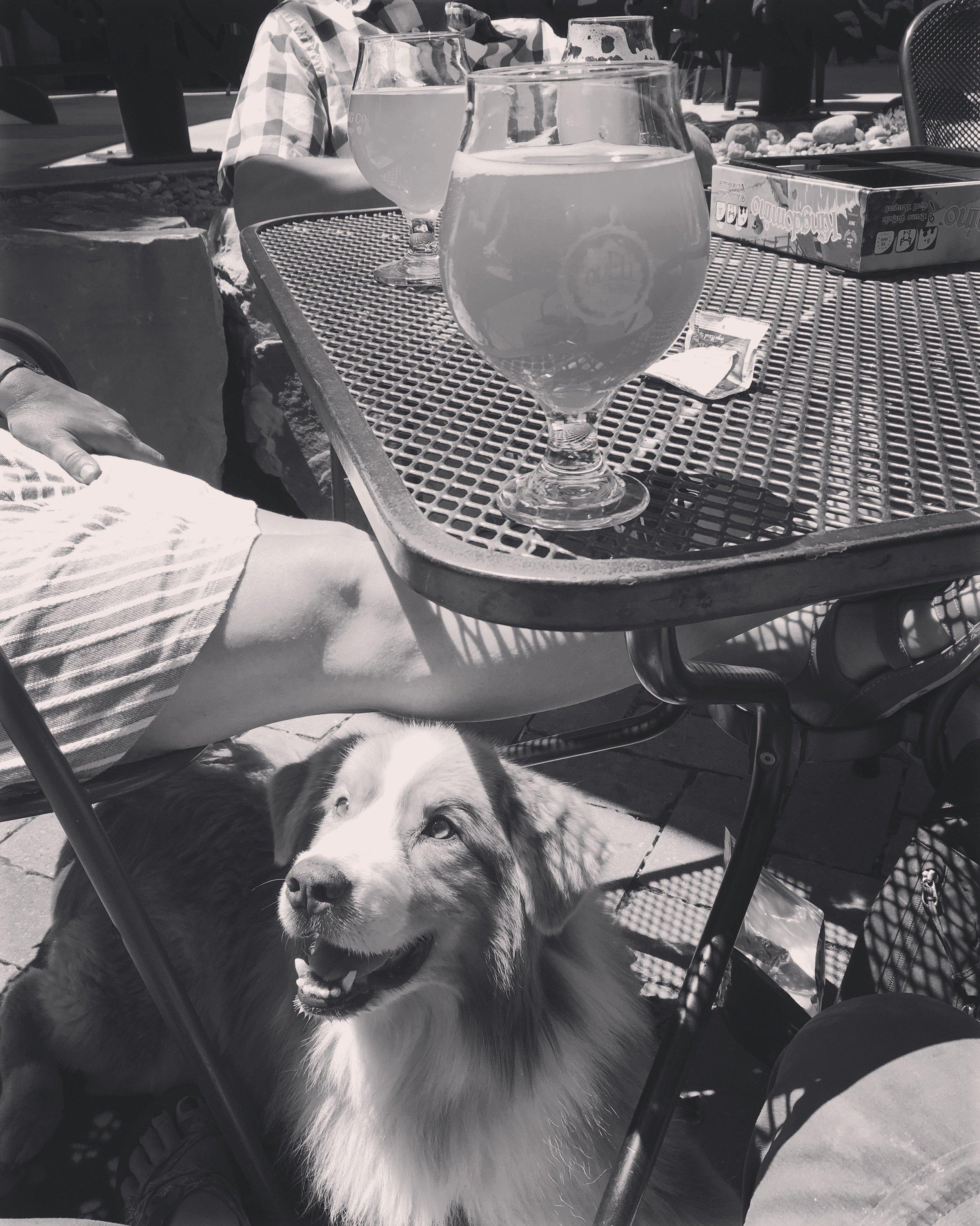 dogs-in-breweries-colorado