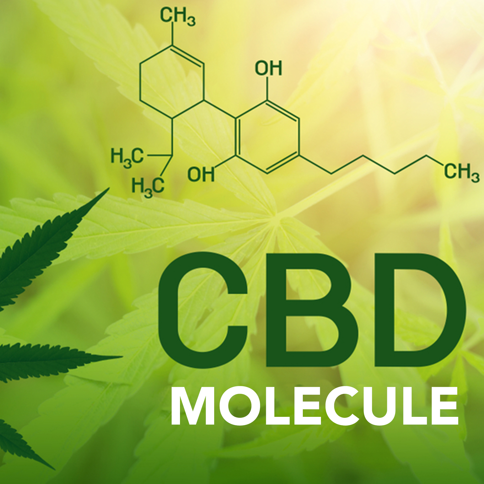 visualizes what is cbd molecule