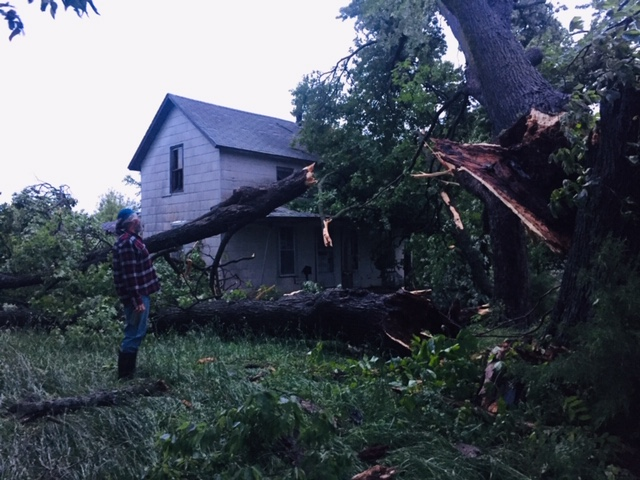 Katie Nixon - Storm Damage maple.jpg