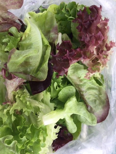 Katie Nixon - Bag of Lettuce.JPG