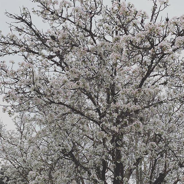 Quase primavera. 🌻🌼