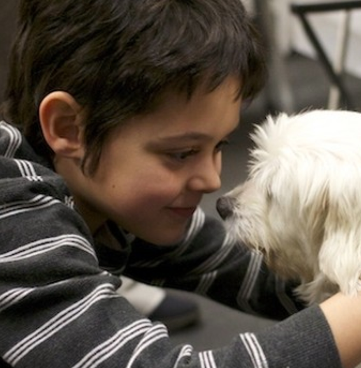 """Gideon - This is Gideon. When he was 7 he participated in our partner Teach HEART's program """"Caring Kids: Animal Ambassadors"""" in partnership with Animal Haven. As an Animal Ambassador, Gideon took part in five different programs, each three sessions long, learning about topics including companion animal protection, the importance of adopting small furry animals, birds, and reptiles, building reverence for farm animals, protecting wildlife, and humane training techniques, along with promoting dog and cat adoptions. Gideon explained, """"I read this book called 'Harry the Homeless Puppy' and people were volunteering at this animal shelter. So after I read the whole book, my mom [and I] went online and we tried to find local animal shelters that I could volunteer at. All the animal shelters didn't really have something for kids my age. So, we found Animal Haven. It was the best."""" Gideon and his mom would travel from Staten Island to NYC for him to participate in this unique program.Gideon is now 13 years old. His grandmother just adopted two puppy mill rescues. He also encouraged his dad to return to school for his masters at NYU for animal studies! 👏🏻"""