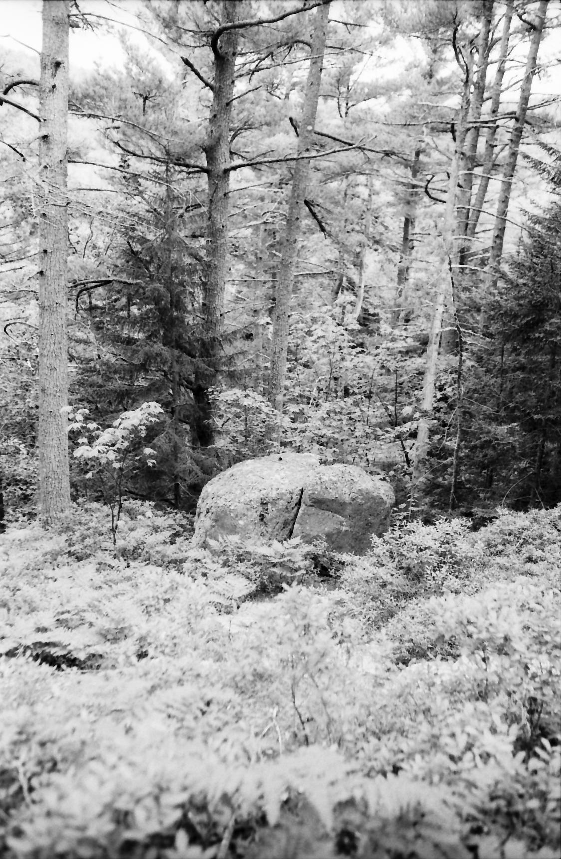 Acadia_Trip-41.jpg