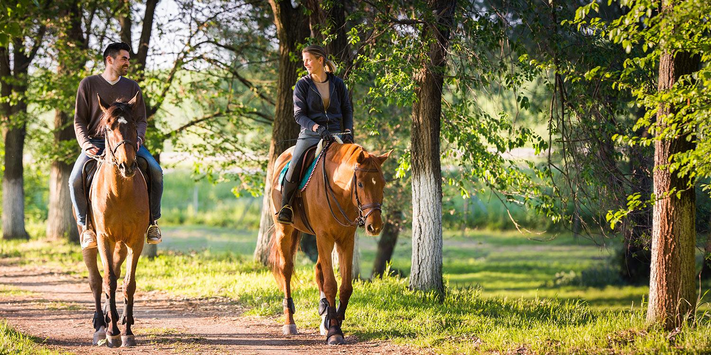 horseback-riding-banner.jpg