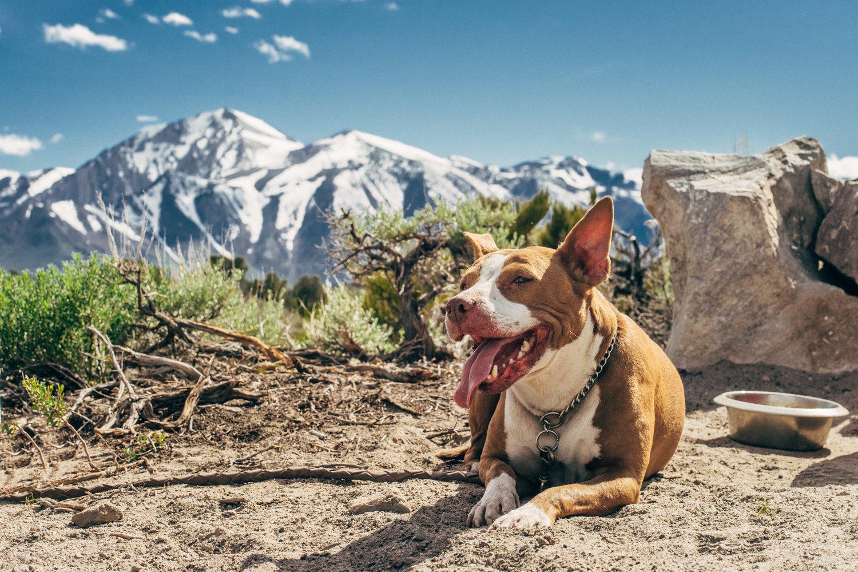 The Canine Adventure Company