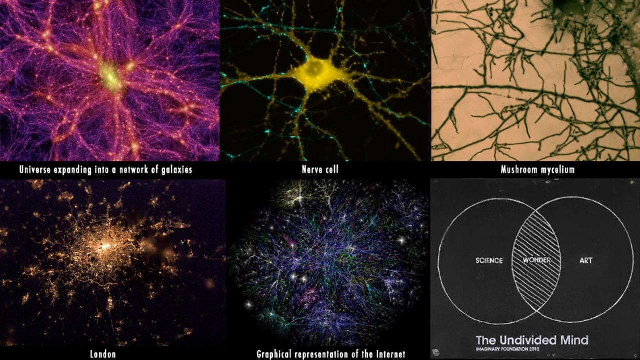 Li patterns mycelium, neurons ect.jpg