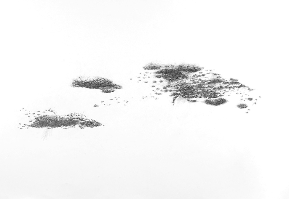 "Floating Worlds  series, graphite on paper, 30"" x 44"""