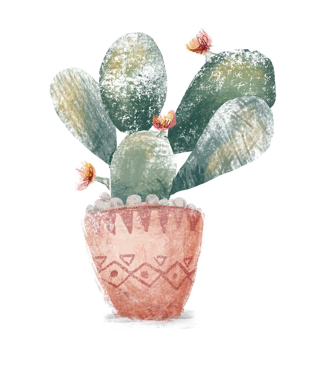 Cactus_.jpg