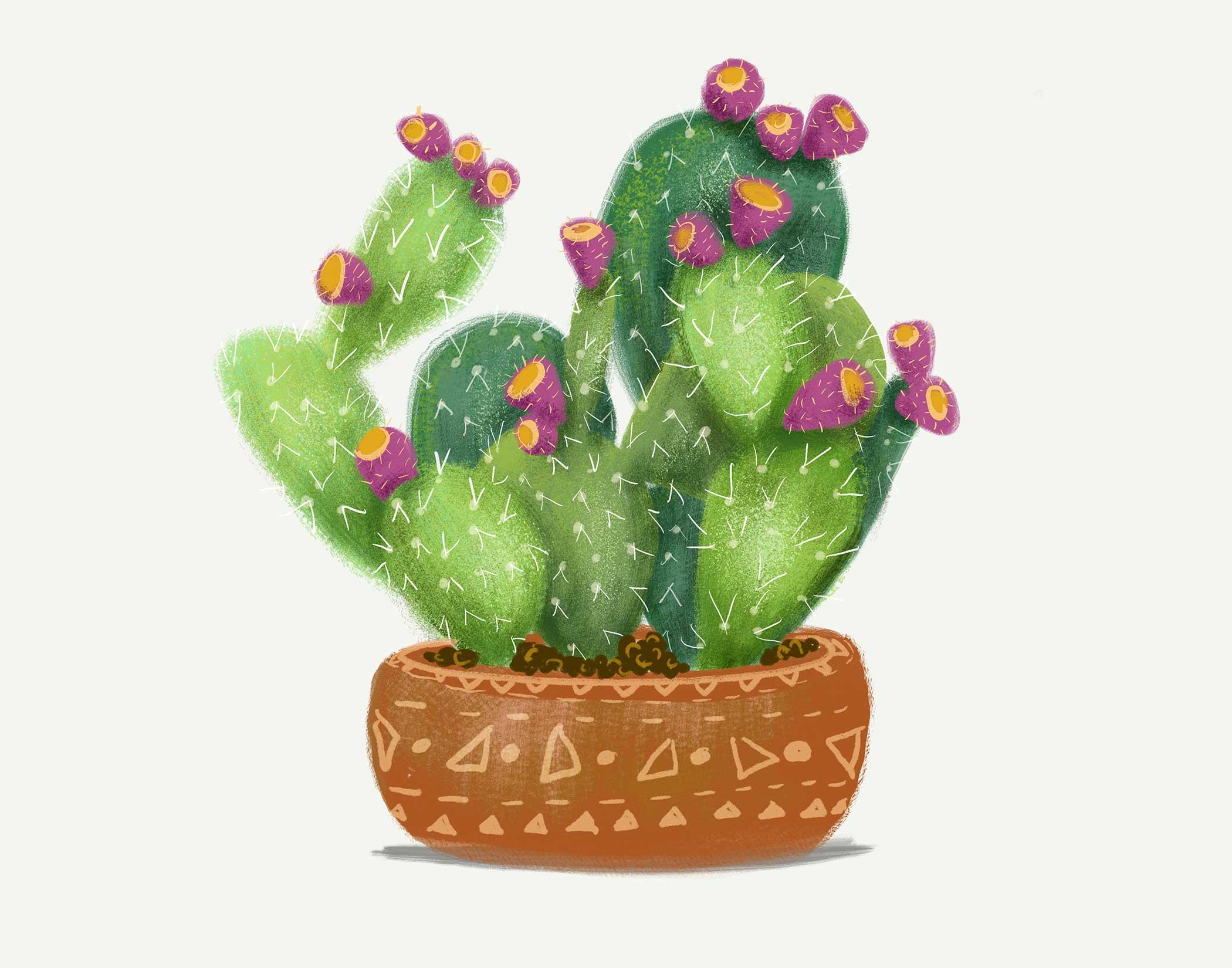 cactus-soft.jpg