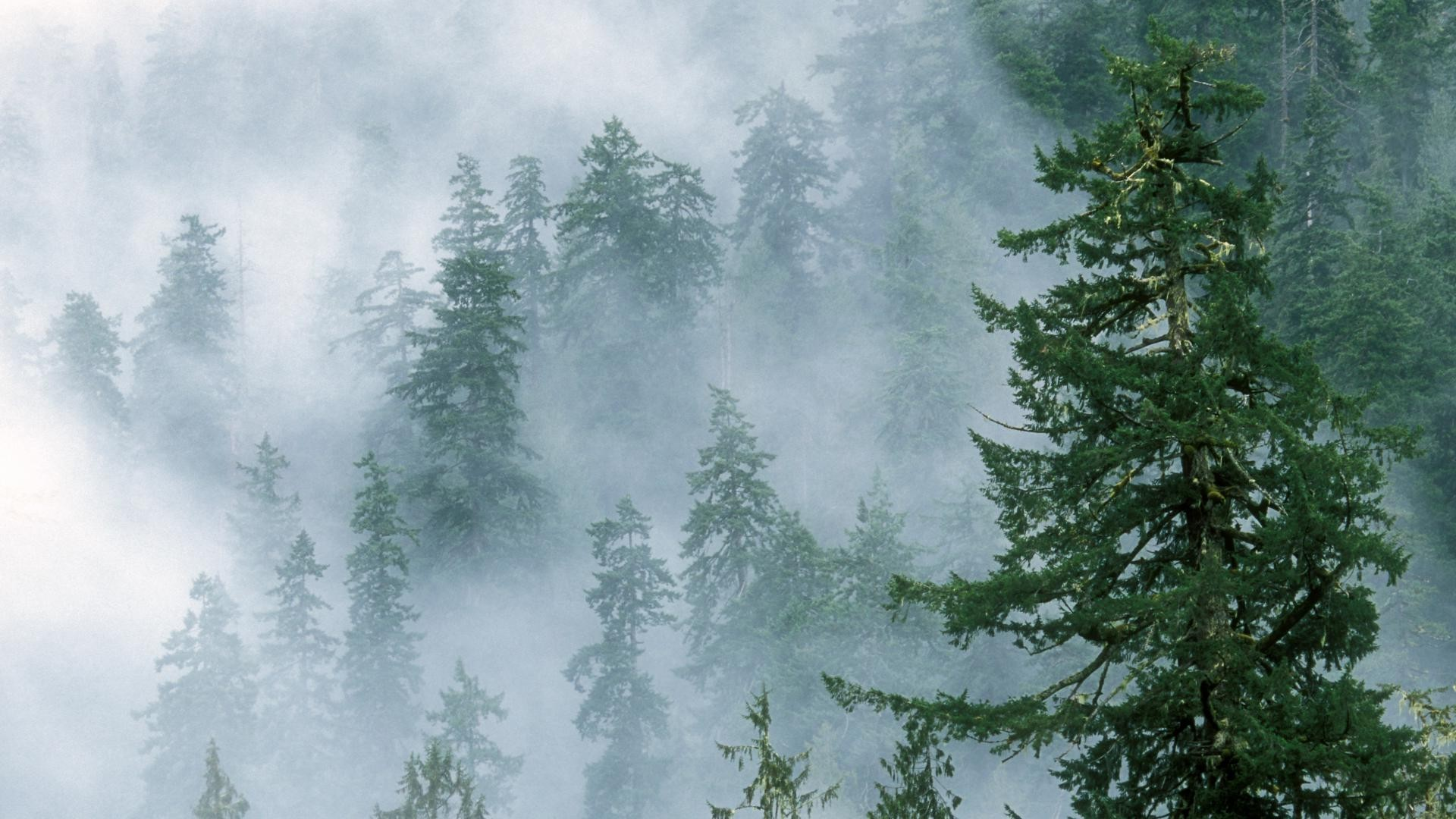 Foggy_Forest_Mountains_Tree.jpg