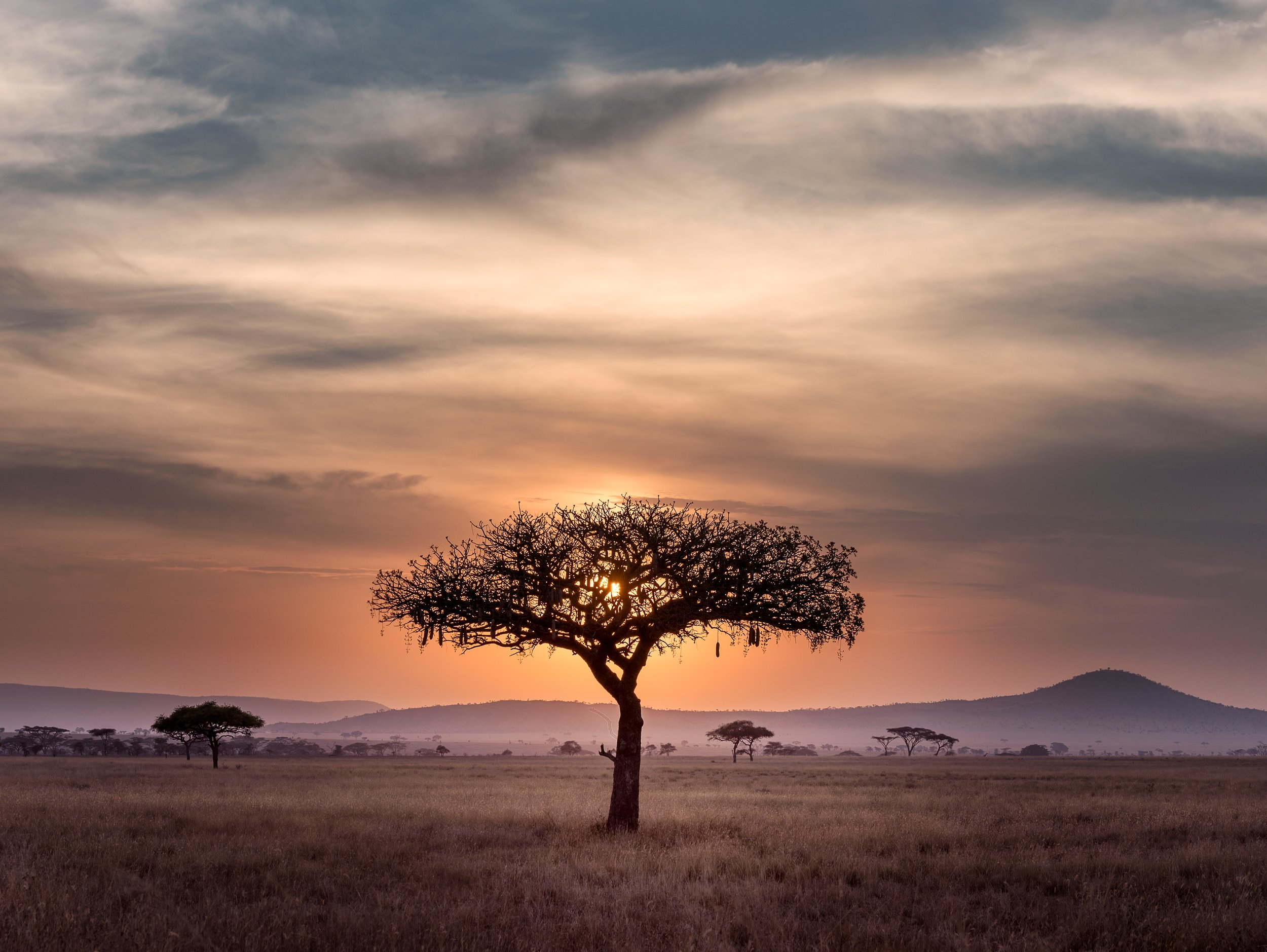 Own a piece of the Mara - Discover our hotel portfolio currently accepting offers for investment or outright purchase in some of the world's most awe-inspiring destinations.