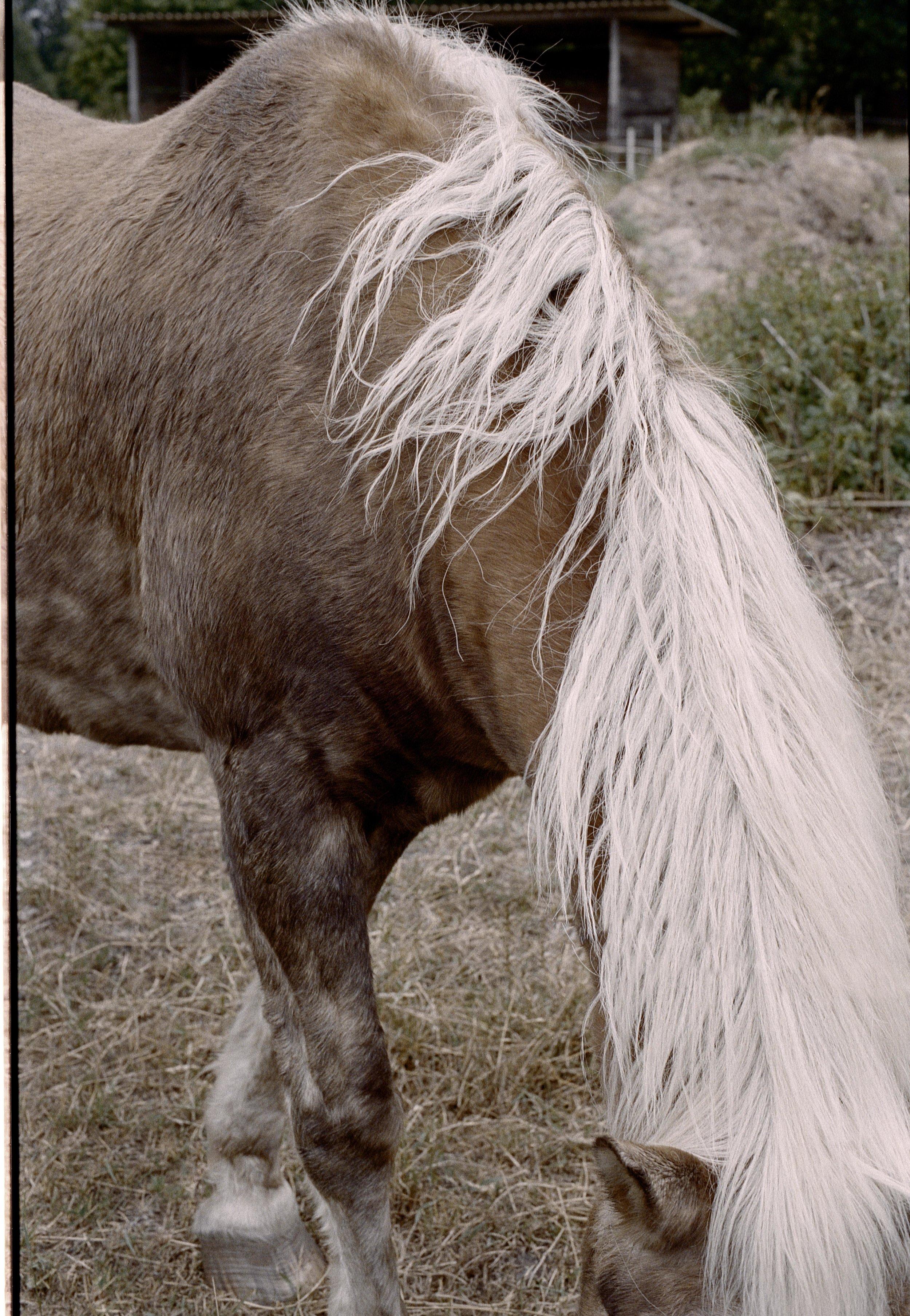 pferd (2).jpg