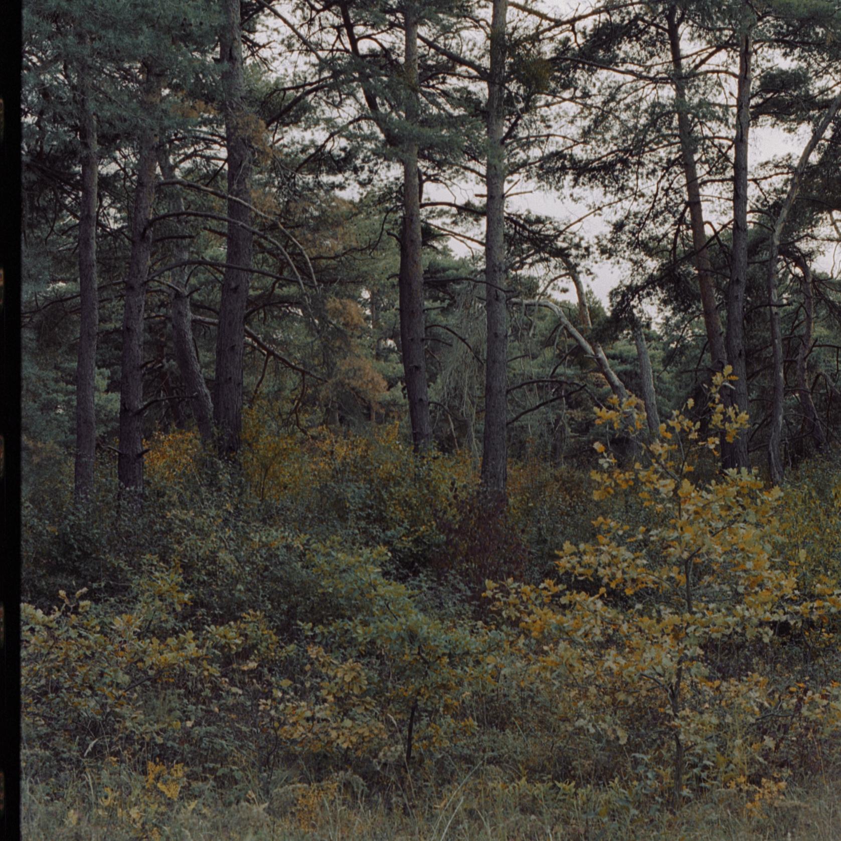botanischerg_14.jpg