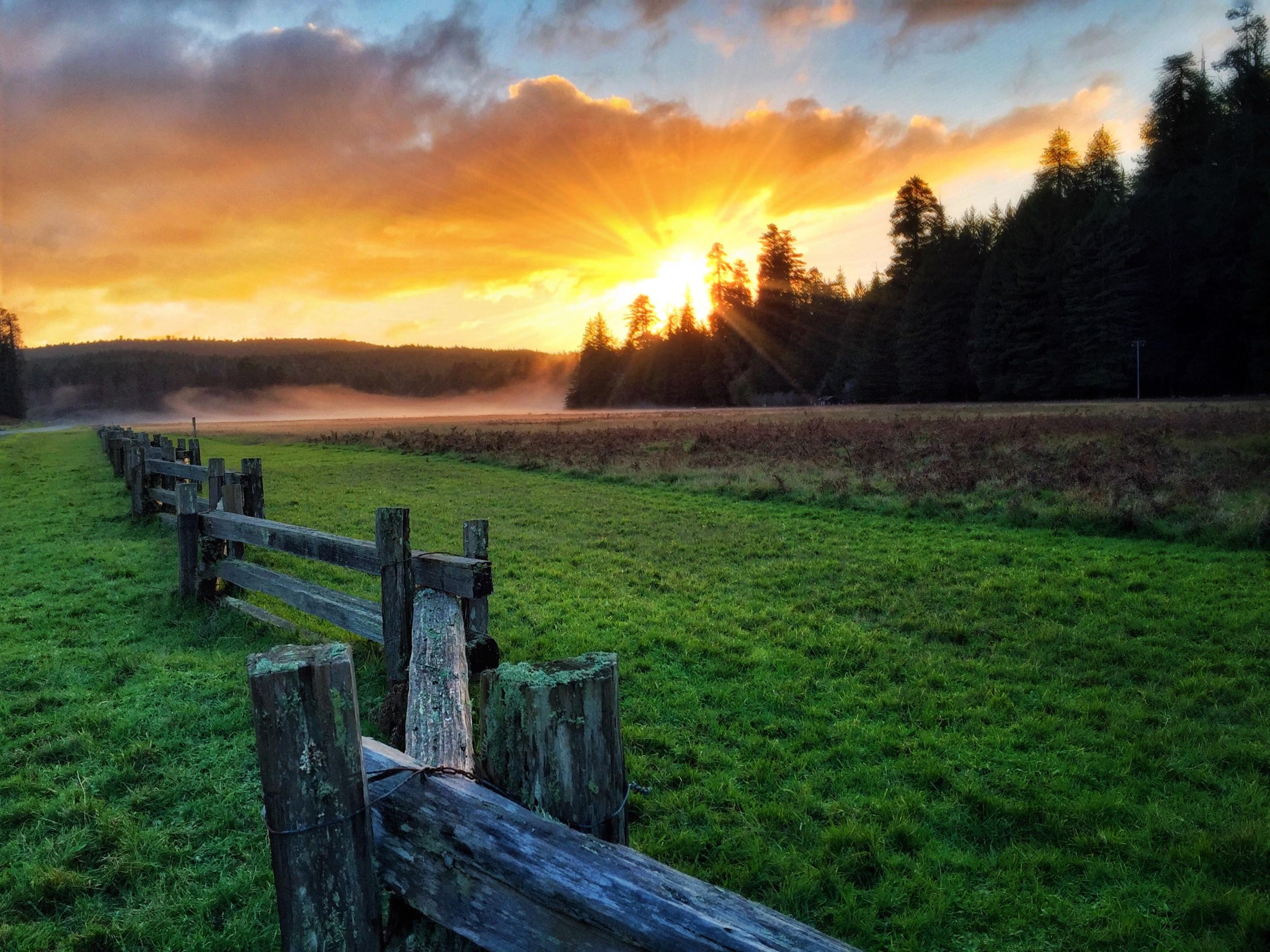 Redwoods national park @ sunset