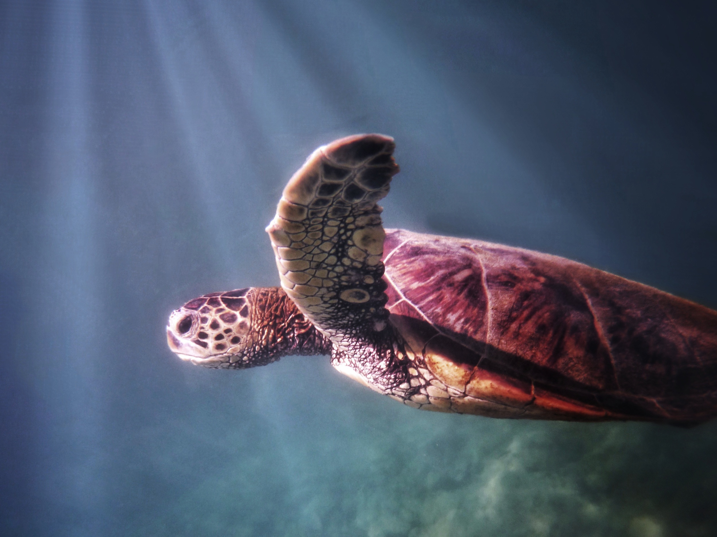 404. - Sorry, I am swimming with the turtles. Click HERE to try again