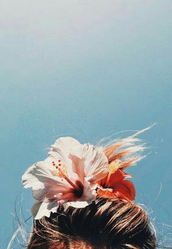hibiscus head.jpg