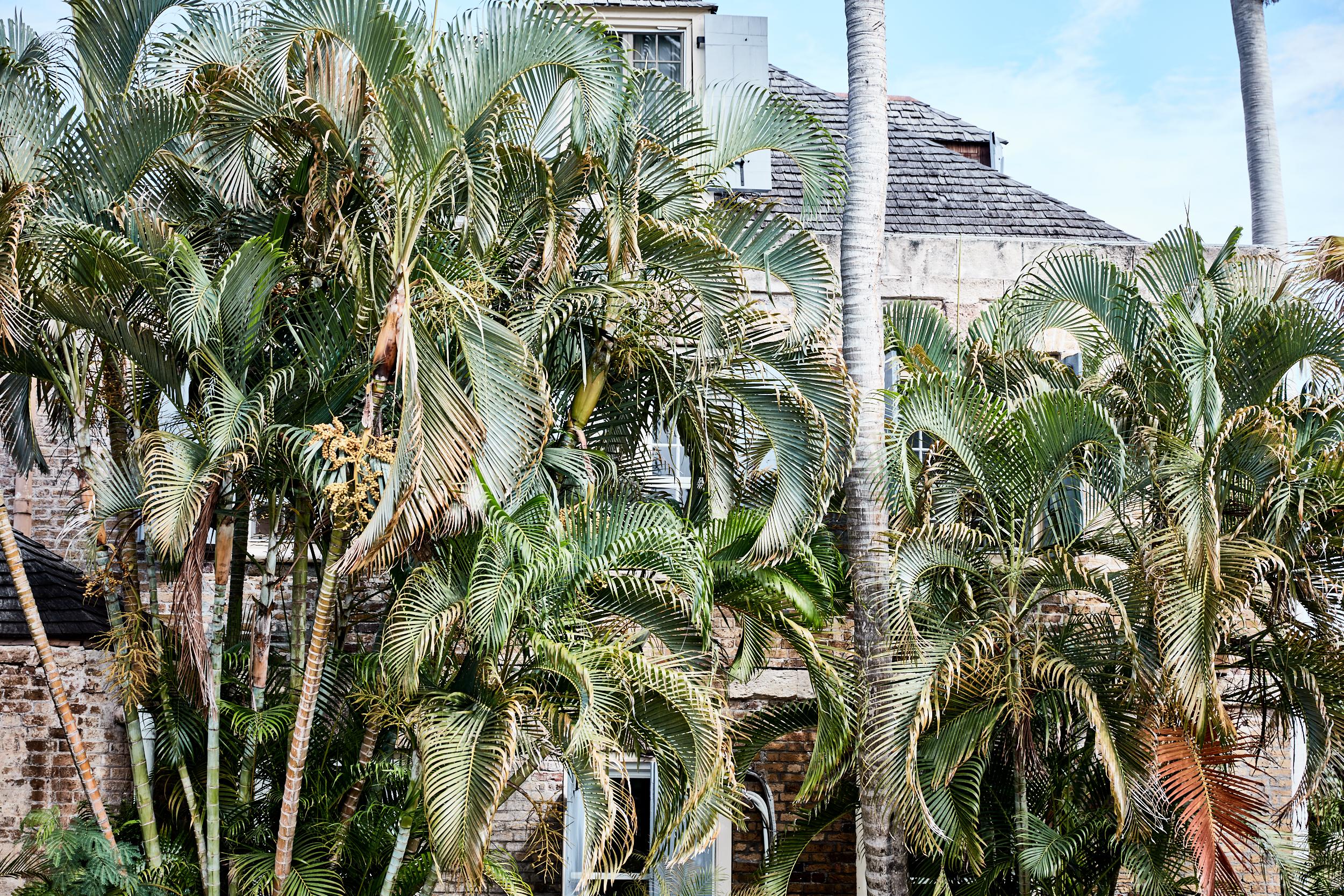JLP_caribbean_0028.jpg