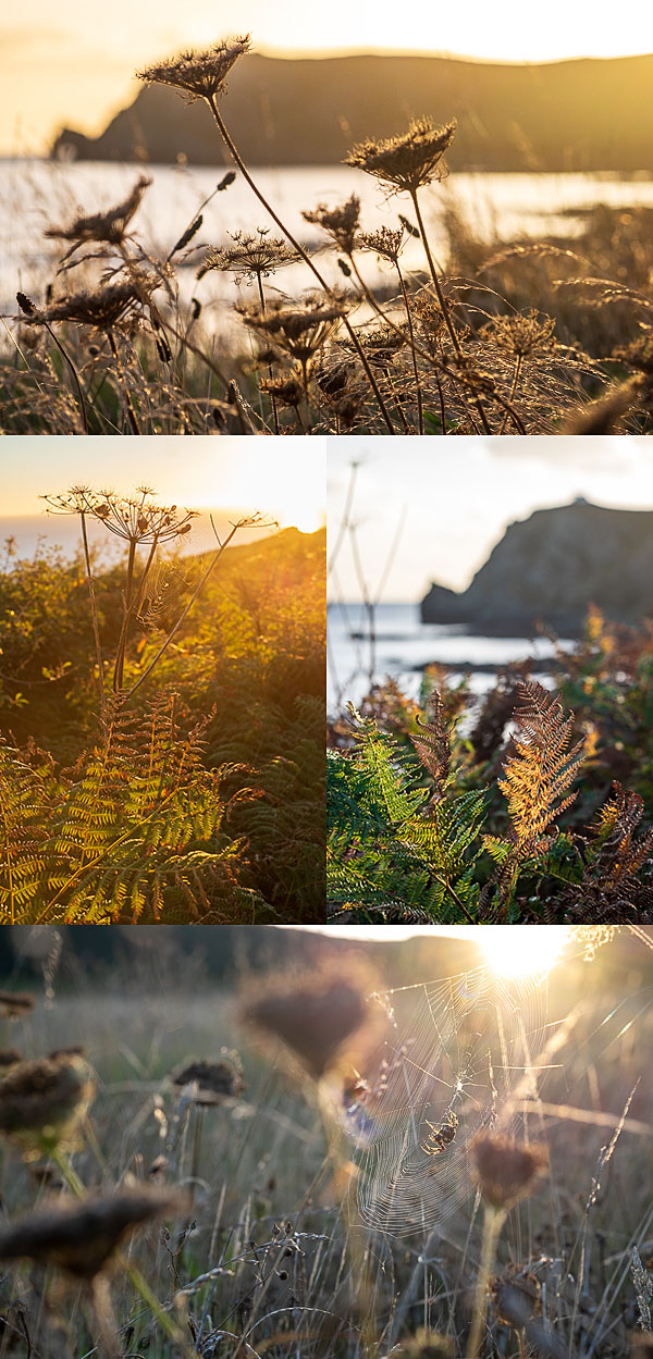 Autumn nature photography, East Prawle