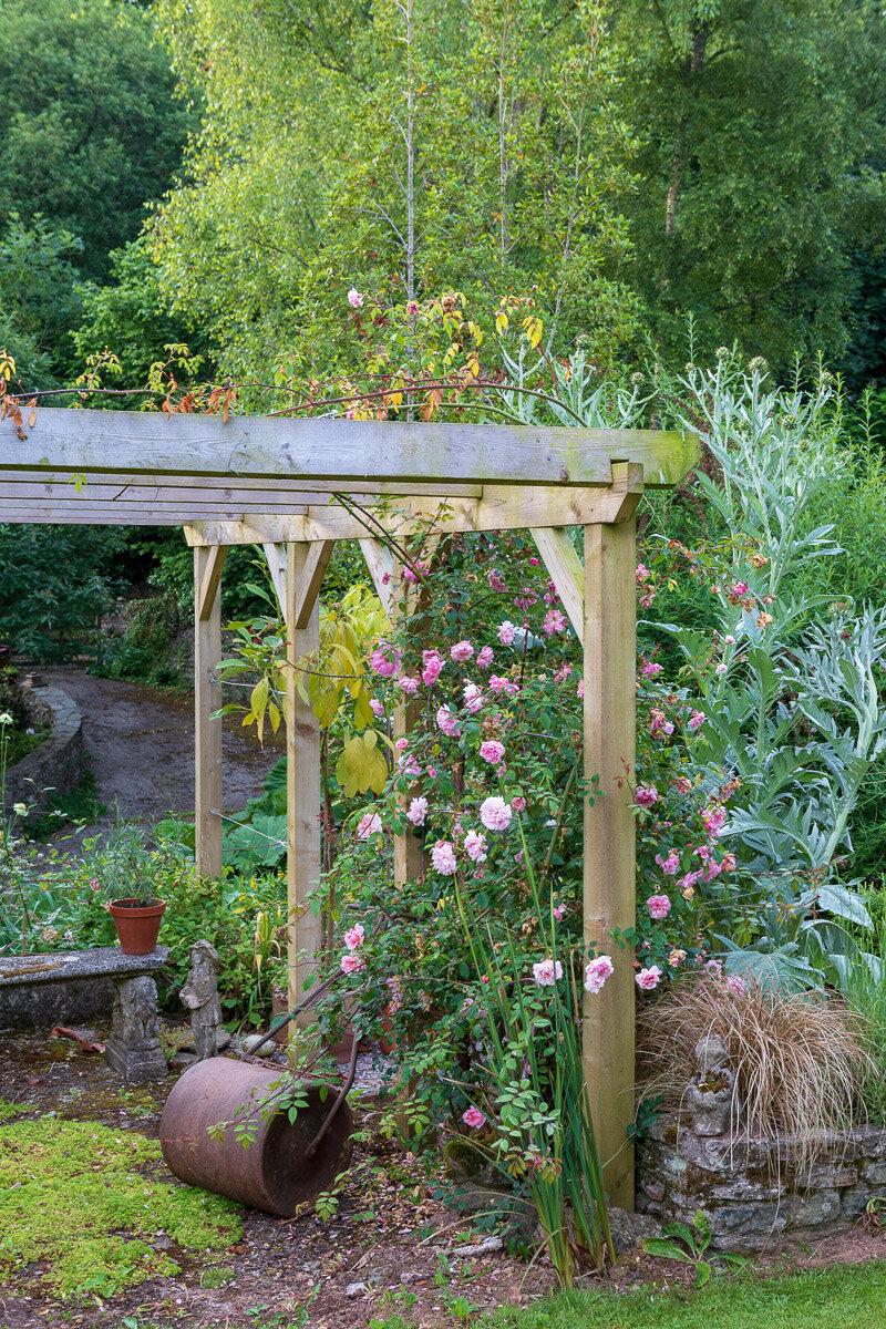 Bramble Torre Garden, Devon, Summer