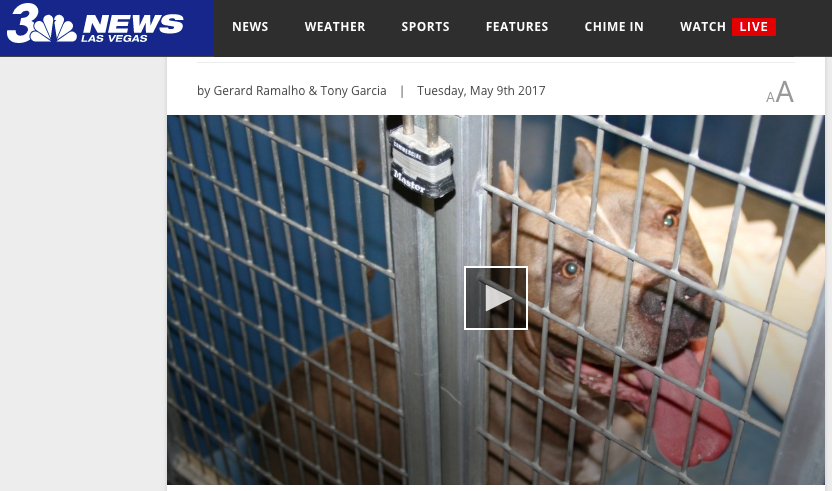 KSNV Las Vegas News Story Featuring Gibson's Canine Classroom's Owner, Mark Gibson